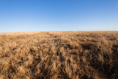 Grassland Horizon Winter Blue Terrain Royalty Free Stock Photo
