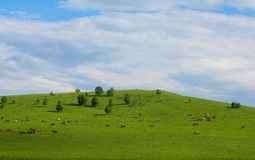 Grassland & Horse Royalty Free Stock Photography