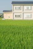 grassland house стоковое фото rf