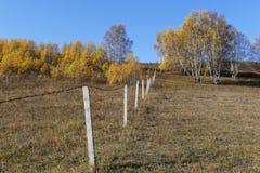 Grassland in inner mongolia Stock Image