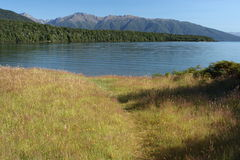 Grassland at lake Te Anau in Fiordland National Park Royalty Free Stock Images