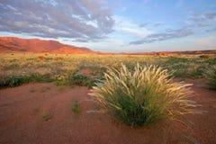 Grassland landscape stock photos