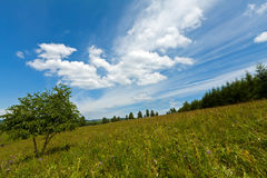 Grassland landscape Stock Images