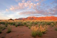 Grassland landscape, Brandberg mountain, Namibia Royalty Free Stock Image