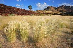 Grassland landscape, Namibia Stock Photos