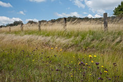 Grassland Landscape near Tentafield Royalty Free Stock Photography