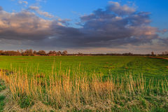 Grassland landscape at sunset Stock Image
