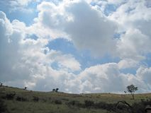 GRASSLAND LANDSCAPE UNDER AFRICAN SKY. View of Southern African grassland landscape with hills and white clouds in a blue sky Royalty Free Stock Images
