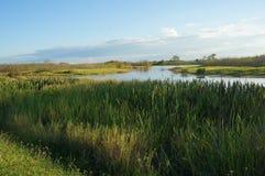 Louisiana swamp river landscape royalty free stock photography