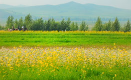 Grassland landscapes and flowers. Grasslands of northern China. This is one of the most beautiful places in China Stock Images