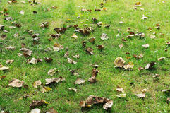 Free Grassland Leaves Royalty Free Stock Images - 17048949