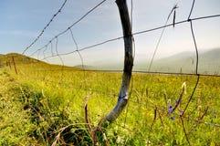 Grassland on the line Stock Image