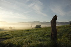Grassland morning Royalty Free Stock Images