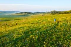 The grassland morning Stock Photo