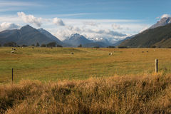 Grassland in Mount Aspiring National Park. New Zealand stock photography