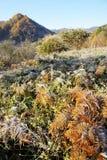 Grassland with mountain Royalty Free Stock Photos