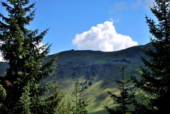 Grassland mountain. A grassland mountain with conifer in front Stock Photos