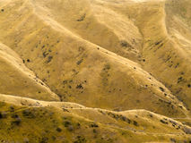 Grassland on mountain slope yellow from drought Royalty Free Stock Image