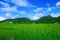Grassland and   mountain  Thailand Stock Image
