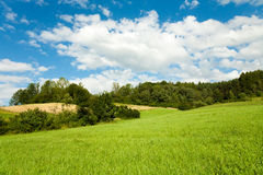 Grassland,nature background Royalty Free Stock Photography