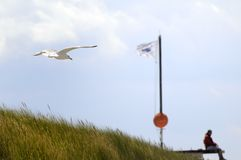 Grassland near Baltic Sea Stock Image