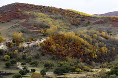 The grassland near Beijing autumn, yellow, red, green trees on the hillside Royalty Free Stock Photography