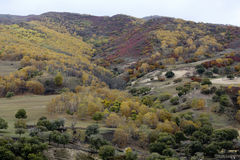 The grassland near Beijing autumn, yellow, red, green trees on the hillside royalty free stock images