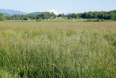 Grassland near Mount Baker Stock Images