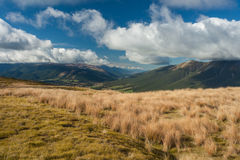 Grassland in Nelson Lakes National Park Stock Images