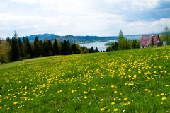 Grassland, Niedzica, Poland Royalty Free Stock Images