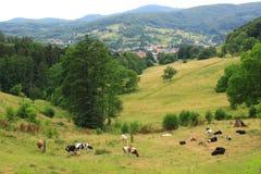 Grassland, Odenwald royalty free stock image