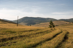 Grassland at Okhota in summer Stock Images