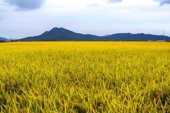 Grassland, Paddy Field, Field, Ecosystem stock images