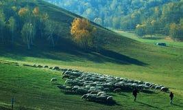 Grassland pastoral Stock Images