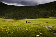 Grassland pasture Stock Image