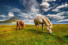 Grassland, Pasture, Ecosystem, Grazing Stock Photos