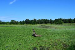 Grassland, Pasture, Field, Sky stock image
