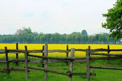 Grassland, Pasture, Field, Yellow stock photography