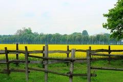 Grassland, Pasture, Field, Yellow royalty free stock photo