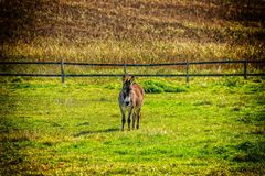 Grassland, Pasture, Green, Grass royalty free stock images