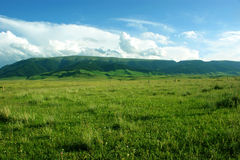 Grassland pastures Royalty Free Stock Photo