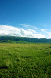 Grassland pastures Royalty Free Stock Photography