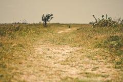 Grassland path Stock Image