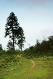 Grassland with path and trees Stock Photos