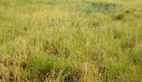 Grassland. Photo toned. Autumn at grassland. Photo toned Royalty Free Stock Images