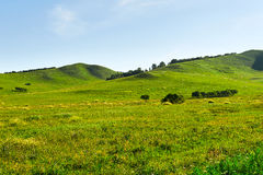 The grassland Stock Images
