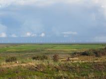 Grassland, Plain, Ecosystem, Prairie royalty free stock images