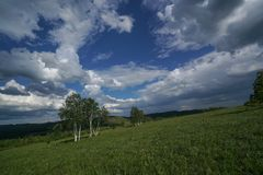 Grassland. The prairie and trees under the blue sky and white clouds Royalty Free Stock Photography