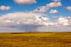 Grassland raining Stock Images