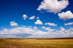 Grassland raining Royalty Free Stock Image